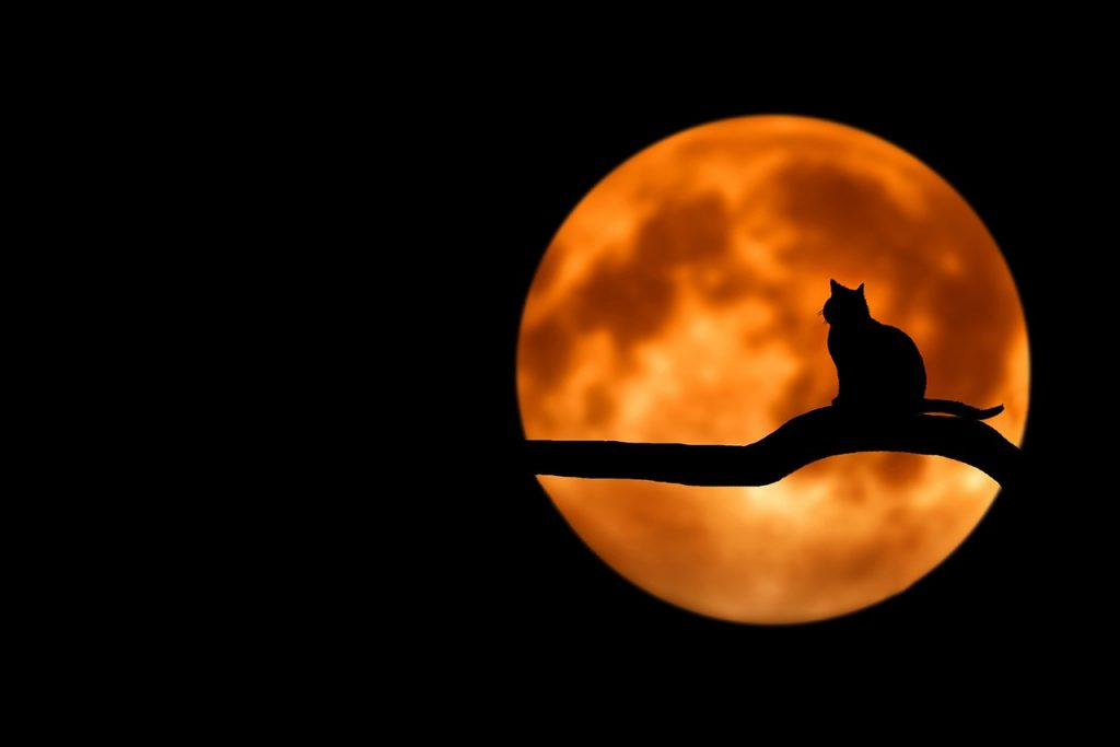 cat on a tree under a full harvest moon