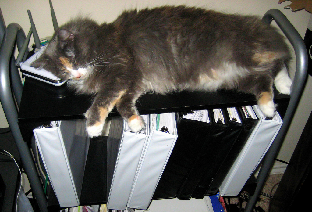 Picture of a cat sitting on a pile of binders.