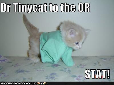 Meme of a cat in scrubs.