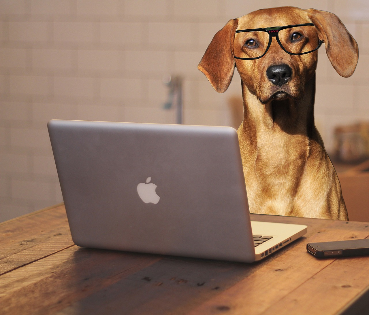 Picture of a dog in front of a computer.