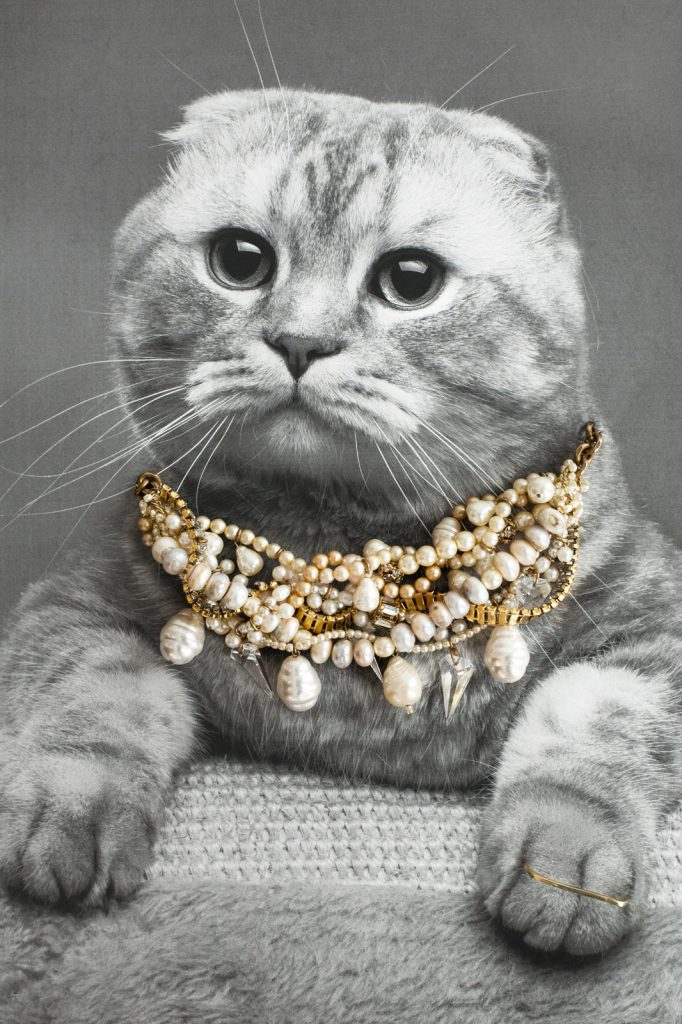 jewelry cat. obviously.